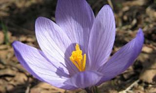 Повеи на пролет в бизнесклимата