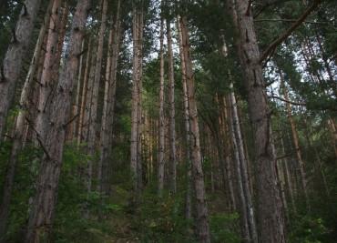 Граждани и бизнес с обща визия за горите