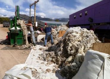 Завод за вълна ще заработи в Сливен