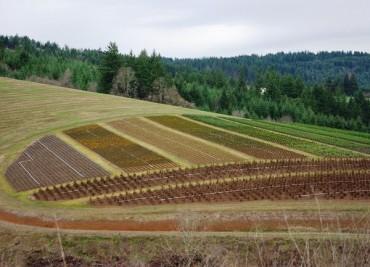 Най-скъпите земеделски земи в България