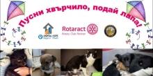 Благотворителна акция в помощ на бездомните животни в Пловдив