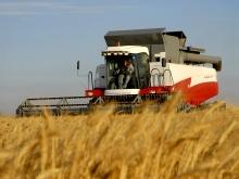 Жътвата на пшеницата в област Добрич започна с добив от 539 кг/дка