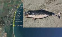 Не рибарите, а сонарите били виновни са смъртността при делфините