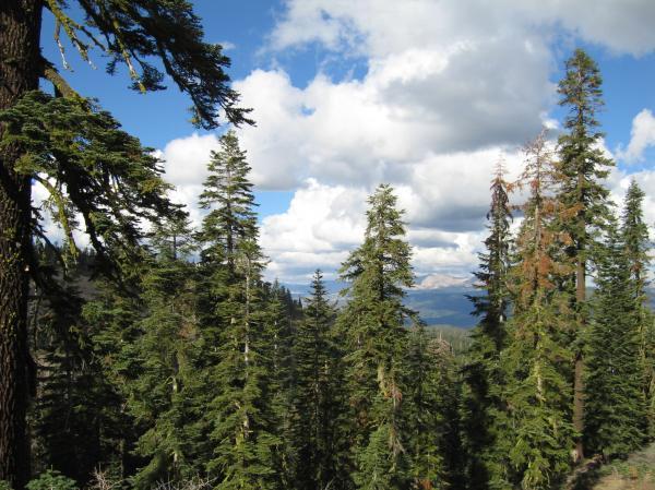 Поредната заблуда на Зелените е разкрита – гората у нас не изчезва, а се разраства!