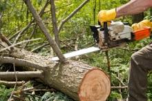 Унищожиха с резачка 30 дка дръвчета до айтоско село