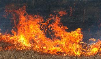 Пожар обхвана 1000 декара гора край границата с Турция