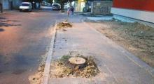 """Арх. Коларов: За отсечените четири липи по ул. """"Дунав"""" ще бъдат засадени осем"""