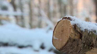 По-висока цена за дървесината през електронните търгове