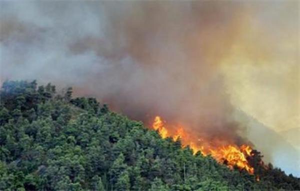 """Зелените пак ламтят за пари, а междувременно гората гори! (Какви са """"еко"""" интересите им?)"""