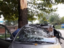 Паднал клон на дърво потроши кола в Добрич