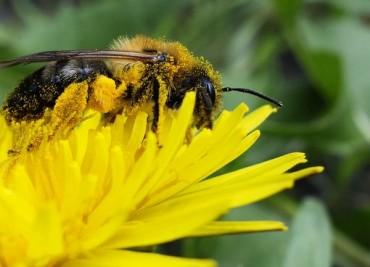 Дронове ще заместват пчелите в опрашването на растенията
