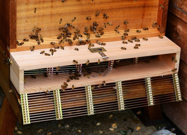 Отчетена е над 60% смъртност на пчелите в България