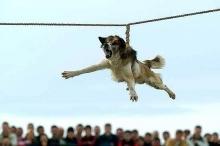 Украинка с резерват в Калифорния организира протест срещу тричането на кучета в Бродилово