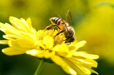Европа гласи забрана за отровните пестициди