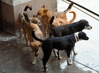 """От """"Четири лапи"""" са предлагали на кмета на Хасково помощ за бездомните кучета"""