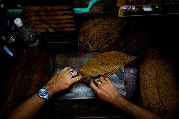 Фотогалерия: Как се произвеждат кубинските пури в Хавана