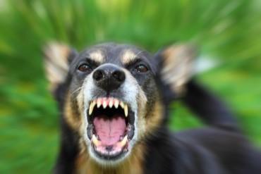 Куче изяде дете посред бял ден в Лондон
