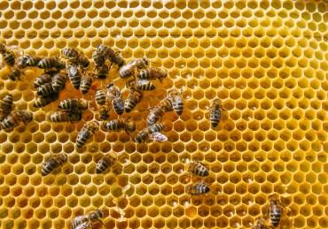 Уникален музей на пчелата официално отвори врати в София
