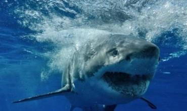 Въздушна тревога срещу акулите (ВИДЕО)