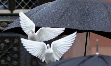 Париж в защита на гълъбите