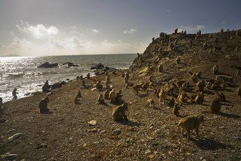 """Фотогалерия: Маймунският остров след урагана """"Мария"""""""