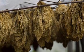 """Тютюнопроизводители искат да се отнеме лицензът на търговеца """"Лийв табако"""""""