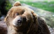 Плашат феновете на Световното със 70 000 гладни мечки