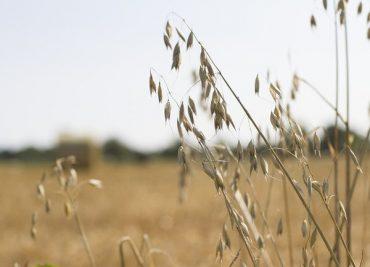 550 дка земеделска земя вече е закупена от Адванс Терафонд