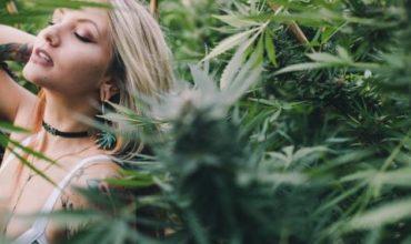 Колко могат да спечелят американците от марихуаната?
