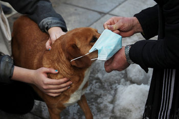 Снимка на деня: Дори кучетата протестират срещу замърсения въздух
