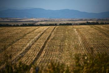 За връзката между посевите и бетонирането на Черноморието