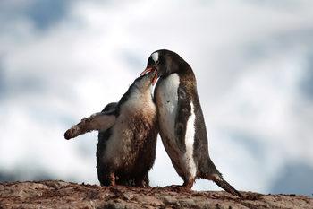 Фотогалерия: Пътуване из Антарктика – срещи с пингвини, тюлени и красиви глетчери