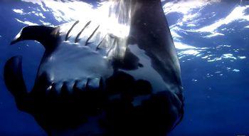 Видео: 40 часа океани в HD без коментар и музика