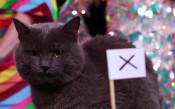 """Ще """"скъсат"""" ли англичаните мрежата на противника според котето ВладИмир"""