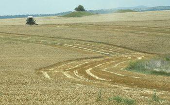 Парламентът спешно поправя закон, довел до хаос при наема на земеделска земя