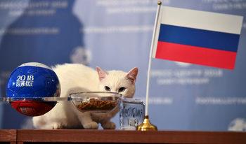 Фотогалерия: Котката Ахил от Ермитажа, която ще предсказва мачовете от Русия 2018