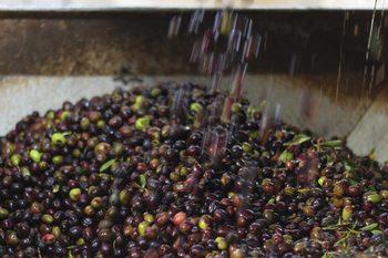 Еврокомисията реагира остро на митата на САЩ върху испанските маслини