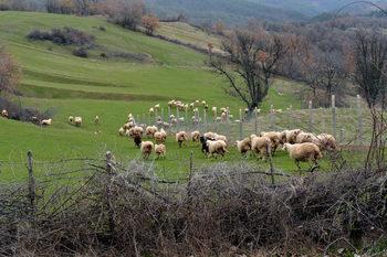 Умрели животни в две благоевградски села предизвикаха проверка за чума
