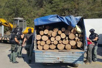 Служители в горите са си направили група за нелегален добив на дървесина