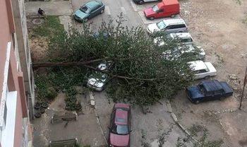 Силният вятър изкорени дървета в Монтана и отнесе фасадата на мол в Благоевград
