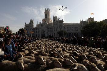 Фотогалерия: Парадът на овцете