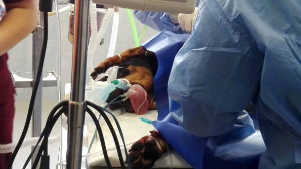 """Над 50 спасени кучета във Ветеринарна клиника """"ИДА-ВЕТ"""" през ловния сезон"""