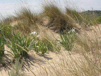 Доц. Антоанета Петрова: испанският модел за възстановяване на дюни може да се приложи в България