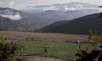 """""""Проблемът са ръцете"""" – наркоплантациите в Колумбия съсипват венецуелците"""