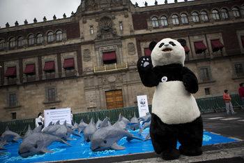 """""""Бъзфийд"""": Платени от WWF горски рейнджъри са избивали бракониери в Азия и Африка"""