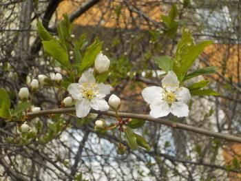 Пролетта, точно пред прозореца