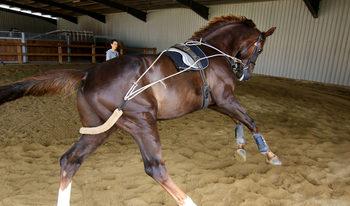 Фотогалерия: Изкуството да обяздиш кон