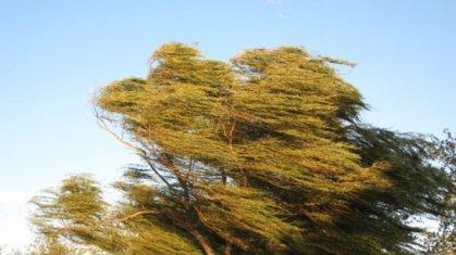 Днес е Световният ден на вятъра