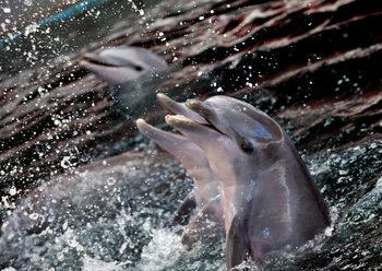 """След смъртта на пет делфина и морски лъв варненският делфинориум се похвали с """"компетентни грижи"""""""