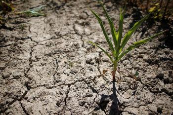 Чили e в хватката на сушата